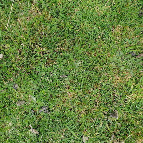 Farmland before using ifert smart fertiliser programme